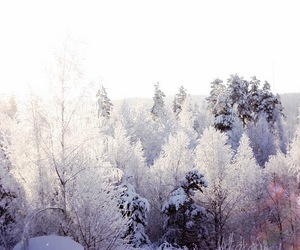 pink, snow, and sweden image