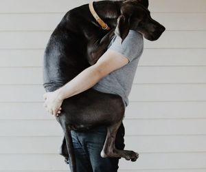 dog, hug, and friends image