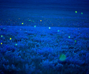 fireflies, night, and blue image
