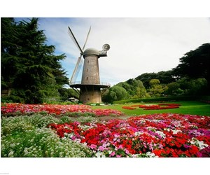 flowers, garden, and windmill image