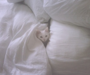 animal, bed, and sheets image