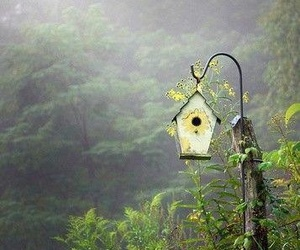 birdhouse and whimsy image