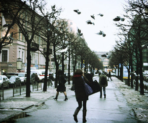 street, bird, and city image
