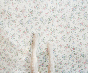 floral, lace, and legs image