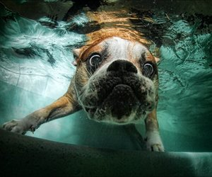 dogs, photography, and underwater image