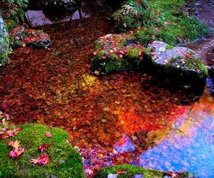 garden and japan image