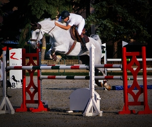horse, jumping, and riding image