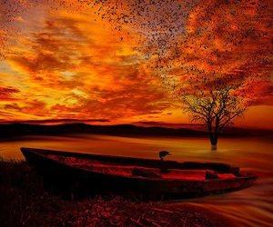 beach, sunset, and birds image
