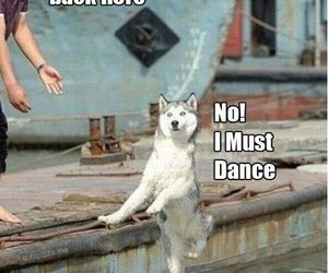 funny, dog, and dance image