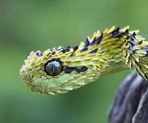 snake, animal, and nature image