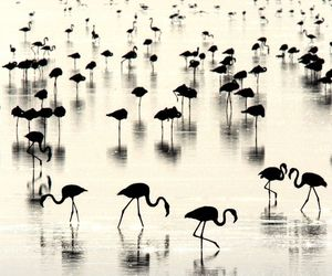 flamingo, water, and animal image