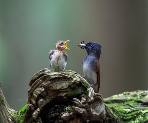 bird, robin, and branch image