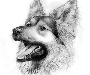 dog drawing and drawing wolf image