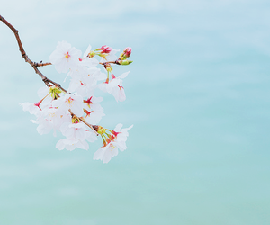 flowers and cherry blossoms image