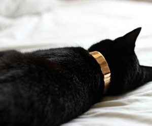 cat, black, and gold image