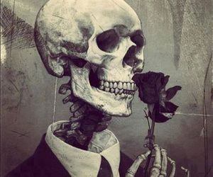 rose, skull, and skeleton image