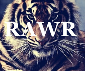 tiger, rawr, and sexy image