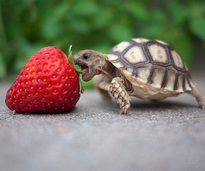 size, strawberry, and cute image