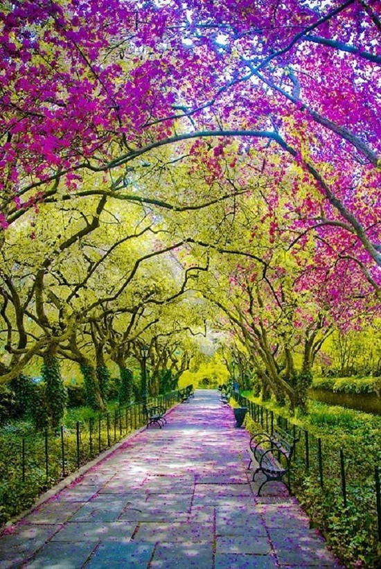 tree, nature, and spring image