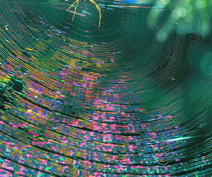 colors, nature, and spider image