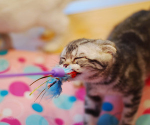 cat, kitten, and toy image