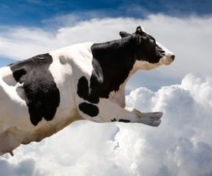 clouds, cow, and lol image
