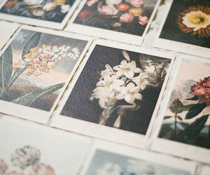 flowers, photography, and vintage image