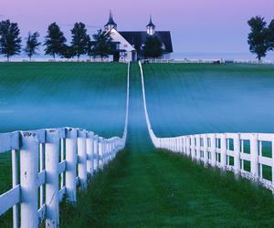kentucky, yiming hu, and horse farm and fog image