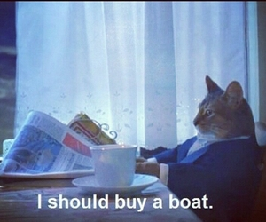 boat, shop, and cat image
