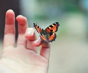 butterfly, colorful, and freedom image