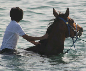 horse, sea, and حصان image