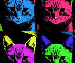 cat, colors, and color image
