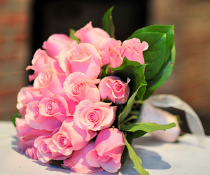 pink, roses, and flowers beautiful image