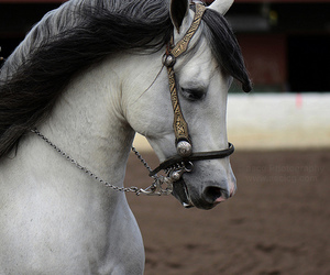 beautiful, love, and equestrian image
