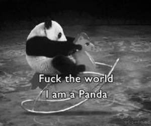 fuck, panda, and quotes image