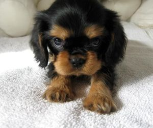 dogs, puppy, and cute animals image