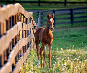 horse and baby image