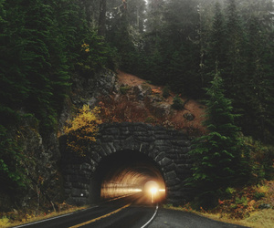 nature, forest, and tunnel image