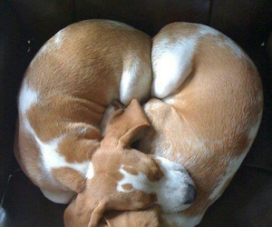 dogs, heart, and sleepy image