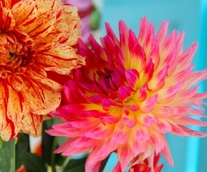 flowers, colorful, and pink image