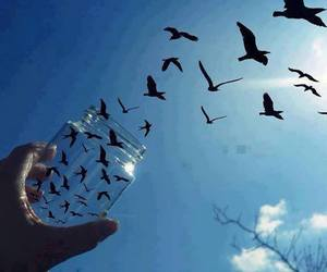 bird, blue sky, and fly image