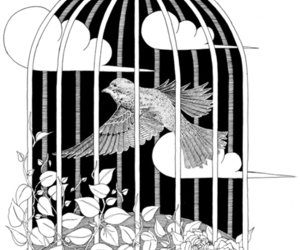 bird, birdcage, and illustration image