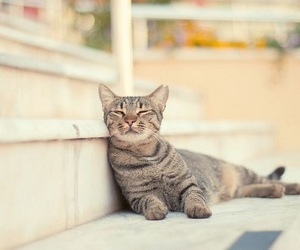 cat, lovely, and stairs image