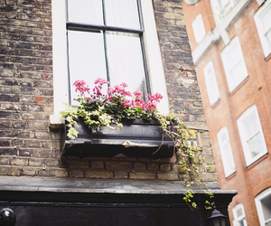 flowers, photography, and window image
