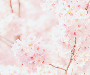 pink, flowers, and blossom image