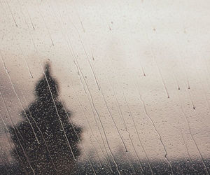 rain, tree, and photography image
