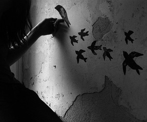 bird, wall, and photography image