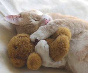 cat, pet, and cuddly image