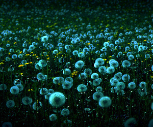 blue, flowers, and lawn image