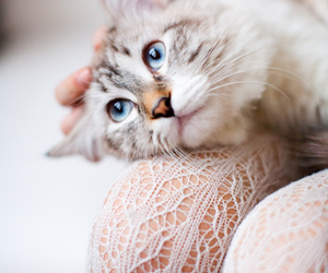 cat, beautiful, and lovely image